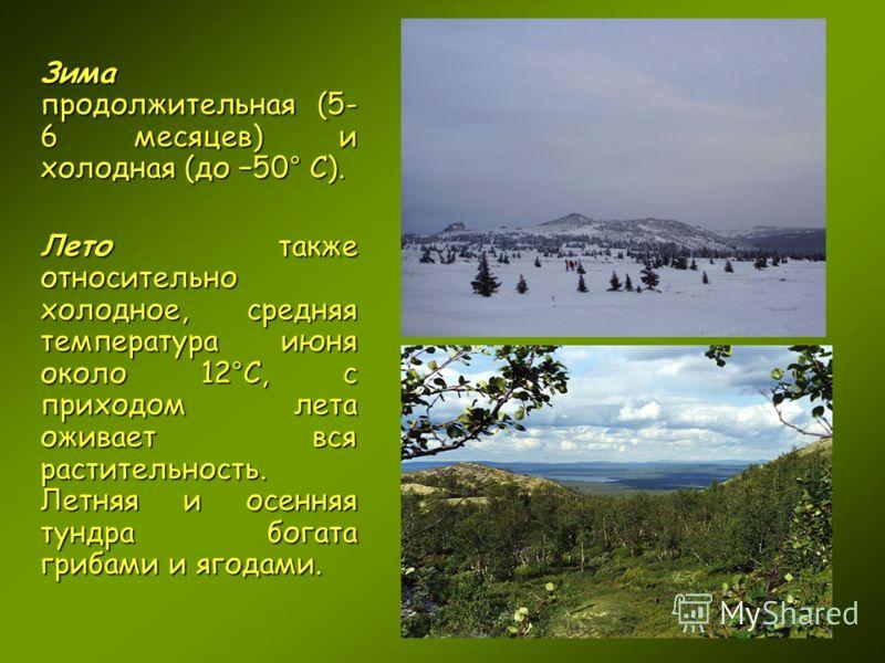 Зима продолжительная (5- 6 месяцев) и холодная (до 50° С). Лето также относительно холодное, средняя температура июня около 12°С, с приходом лета оживает вся растительность. Летняя и осенняя тундра богата грибами и ягодами.