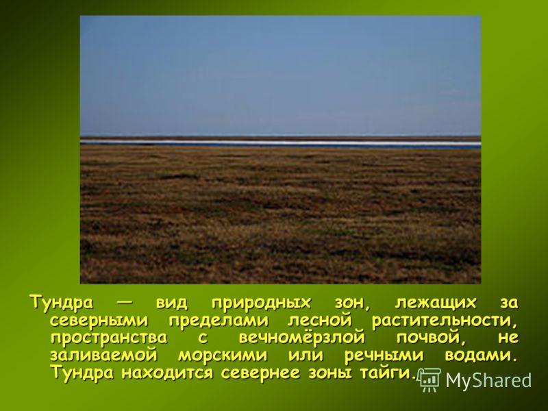 Тундра вид природных зон, лежащих за северными пределами лесной растительности, пространства с вечномёрзлой почвой, не заливаемой морскими или речными водами. Тундра находится севернее зоны тайги.