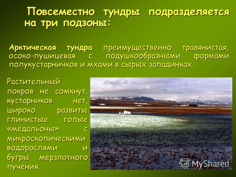 Повсеместно тундры подразделяется на три подзоны: Арктическая тундра преимущественно травянистая, осоко-пушицевая с подушкообразными формами полукустарничков и мхами в сырых западинках. Растительный покров не сомкнут, кустарников нет, широко развиты