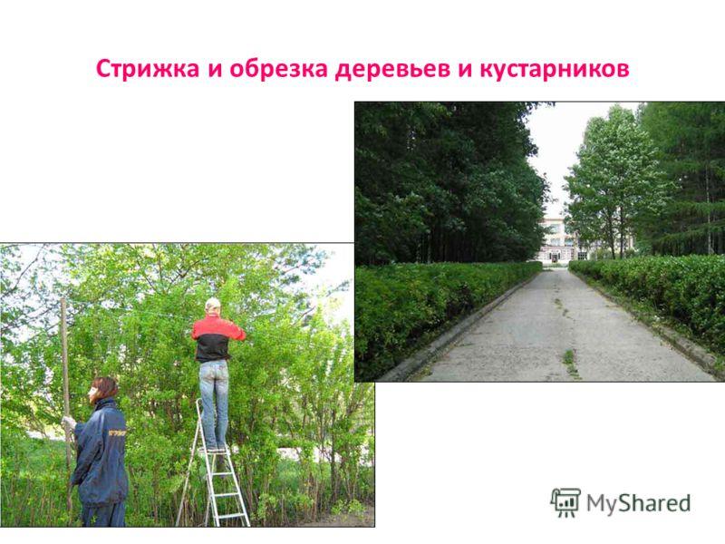 Стрижка и обрезка деревьев и кустарников