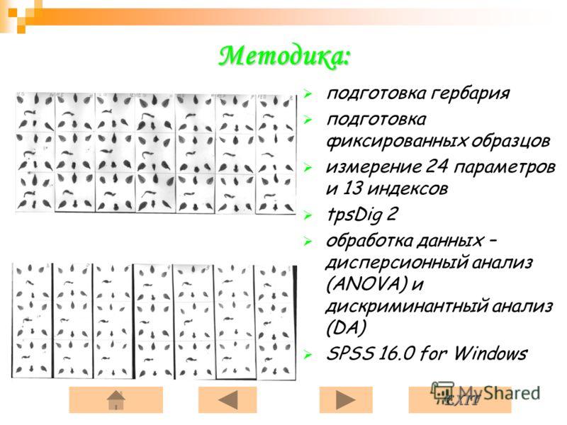 EXIT Методика: подготовка гербария подготовка фиксированных образцов измерение 24 параметров и 13 индексов tpsDig 2 обработка данных – дисперсионный анализ (ANOVA) и дискриминантный анализ (DA) SPSS 16.0 for Windows