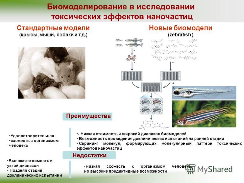 Биомоделирование в исследовании токсических эффектов наночастиц Удовлетворительная схожесть с организмом человека Стандартные модели (крысы, мыши, собаки и т.д.) Преимущества - Низкая стоимость и широкий диапазон биомоделей Возможность проведения док