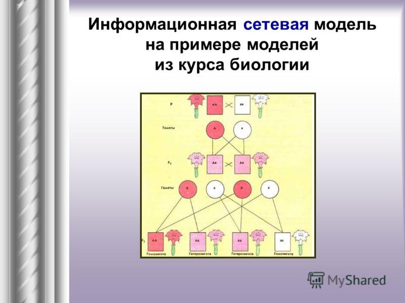 Информационная сетевая модель на примере моделей из курса биологии