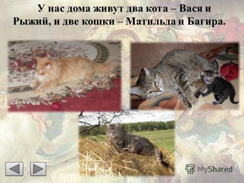У нас дома живут два кота – Вася и Рыжий, и две кошки – Матильда и Багира.