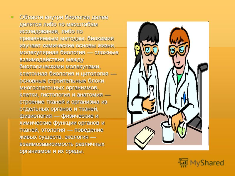 Области внутри биологии далее делятся либо по масштабам исследования, либо по применяемым методам: биохимия изучает химические основы жизни, молекулярная биология сложные взаимодействия между биологическими молекулами, клеточная биология и цитология
