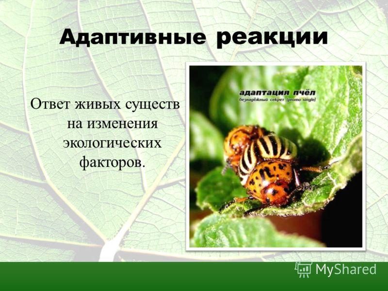 Адаптивные реакции Ответ живых существ на изменения экологических факторов.