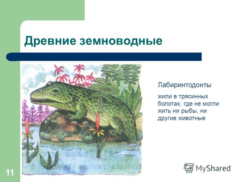 11 Древние земноводные Лабиринтодонты жили в трясинных болотах, где не могли жить ни рыбы, ни другие животные