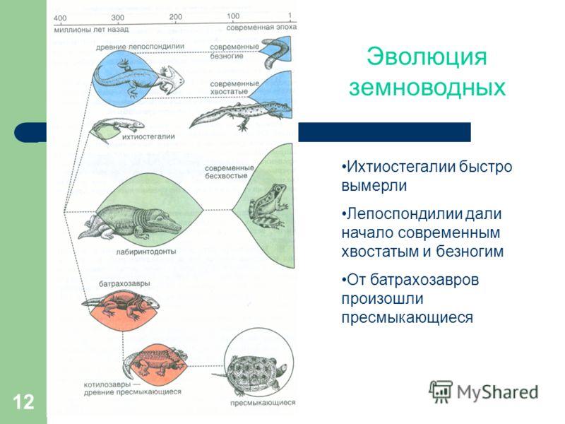 12 Эволюция земноводных Ихтиостегалии быстро вымерли Лепоспондилии дали начало современным хвостатым и безногим От батрахозавров произошли пресмыкающиеся