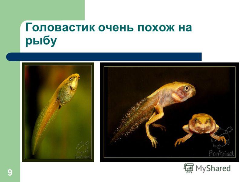 9 Головастик очень похож на рыбу