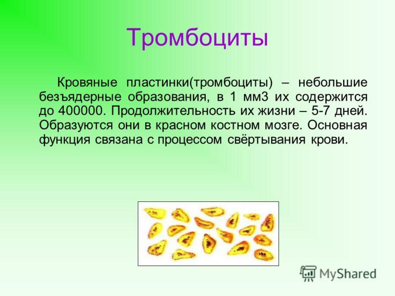 Тромбоциты Кровяные пластинки(тромбоциты) – небольшие безъядерные образования, в 1 мм3 их содержится до 400000. Продолжительность их жизни – 5-7 дней. Образуются они в красном костном мозге. Основная функция связана с процессом свёртывания крови.