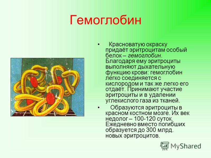 Гемоглобин Красноватую окраску придаёт эритроцитам особый белок – гемоглобин. Благодаря ему эритроциты выполняют дыхательную функцию крови: гемоглобин легко соединяется с кислородом и так же легко его отдаёт. Принимают участие эритроциты и в удалении