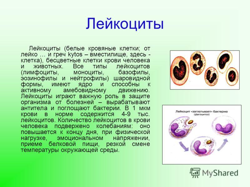 Лейкоциты Лейкоциты (белые кровяные клетки; от лейко … и греч kytos – вместилище, здесь - клетка), бесцветные клетки крови человека и животных. Все типы лейкоцитов (лимфоциты, моноциты, базофилы, эозинофилы и нейтрофилы) шаровидной формы, имеют ядро