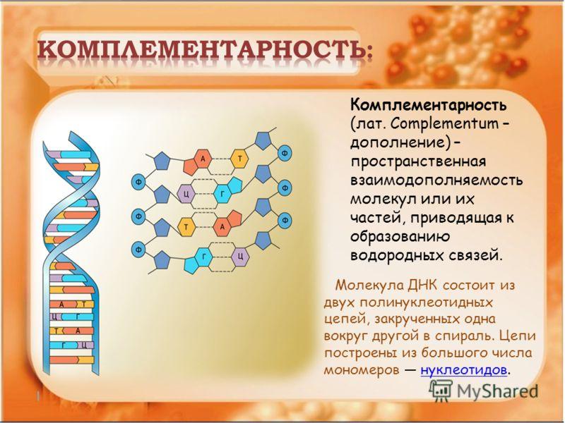 Комплементарность (лат. Complementum – дополнение) – пространственная взаимодополняемость молекул или их частей, приводящая к образованию водородных связей. Молекула ДНК состоит из двух полинуклеотидных цепей, закрученных одна вокруг другой в спираль