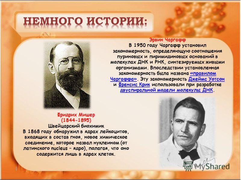 Фридрих Мишер (1844-1895) Швейцарский биохимик В 1868 году обнаружил в ядрах лейкоцитов, входящих в состав гноя, новое химическое соединение, которое назвал нуклеином (от латинского nucleus – ядро), полагая, что оно содержится лишь в ядрах клеток. Эр
