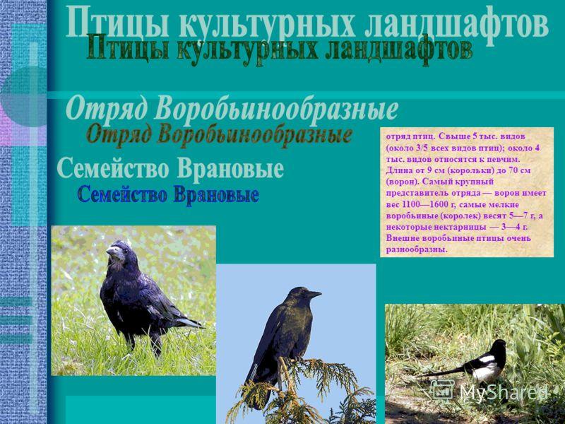 отряд птиц. Свыше 5 тыс. видов (около 3/5 всех видов птиц); около 4 тыс. видов относятся к певчим. Длина от 9 см (корольки) до 70 см (ворон). Самый крупный представитель отряда ворон имеет вес 11001600 г, самые мелкие воробьиные (королек) весят 57 г,