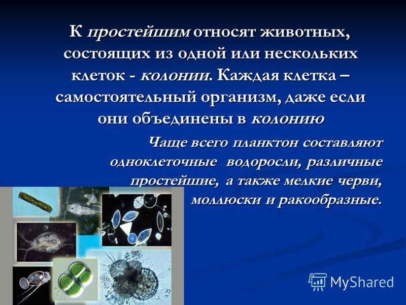 К простейшим относят животных, состоящих из одной или нескольких клеток - колонии. Каждая клетка – самостоятельный организм, даже если они объединены в колонию К простейшим относят животных, состоящих из одной или нескольких клеток - колонии. Каждая