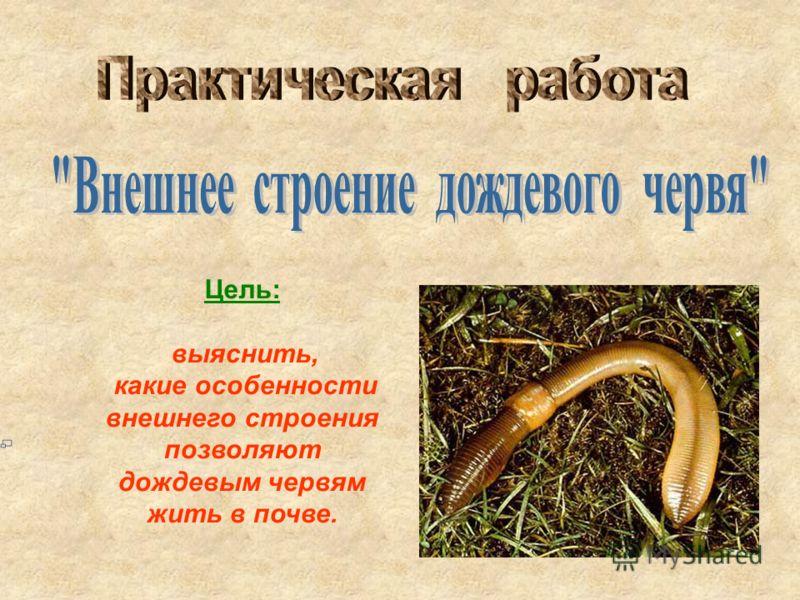 Цель: выяснить, какие особенности внешнего строения позволяют дождевым червям жить в почве.