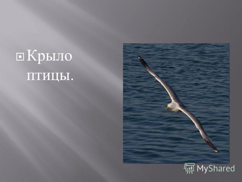 Крыло птицы.