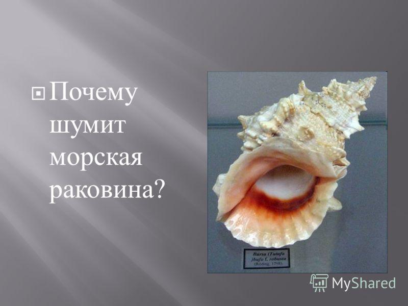 Почему шумит морская раковина ?