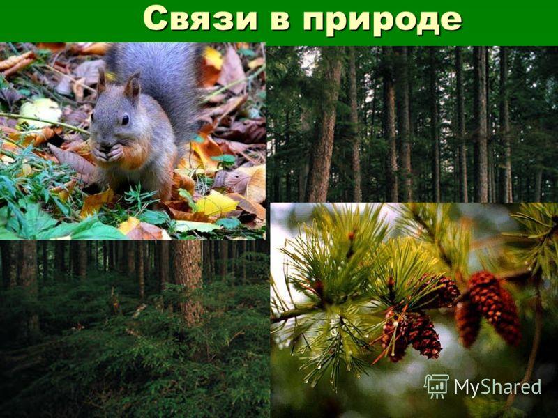 Связи в природе