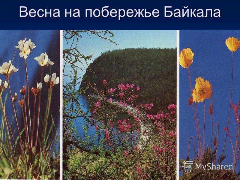 Весна на побережье Байкала