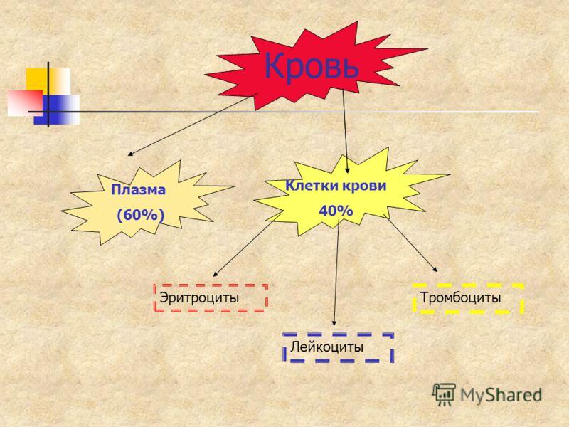 Кровь Плазма (60%) Клетки крови 40% Лейкоциты Тромбоциты Эритроциты