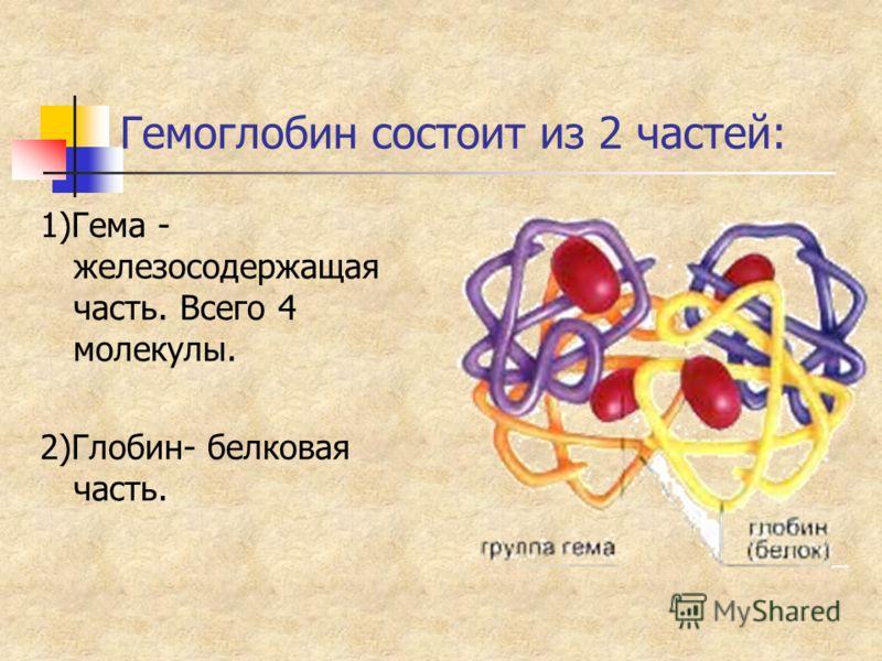 Гемоглобин состоит из 2 частей: 1)Гема - железосодержащая часть. Всего 4 молекулы. 2)Глобин- белковая часть.