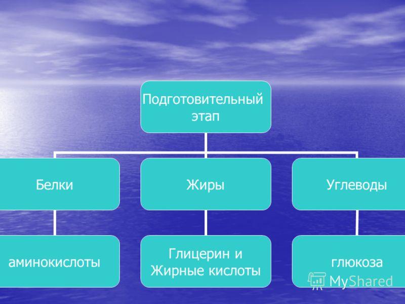 Подготовительный этап Белки аминокислоты Жиры Глицерин и Жирные кислоты Углеводы глюкоза