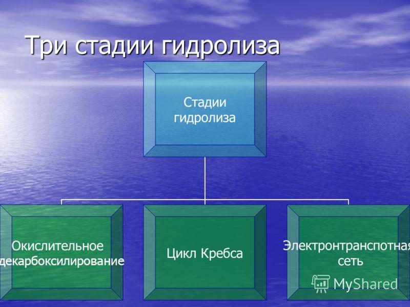 Три стадии гидролиза Стадии гидролиза Окислительное декарбоксилирование Цикл Кребса Электронтранспотная сеть