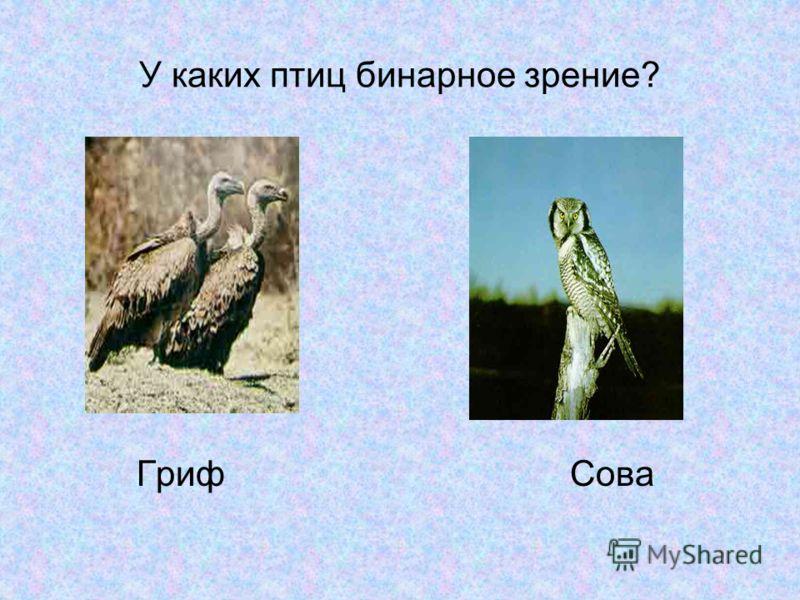 У каких птиц бинарное зрение? Гриф Сова