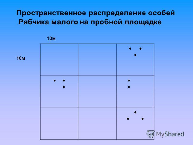 Пространственное распределение особей Рябчика малого на пробной площадке 10м