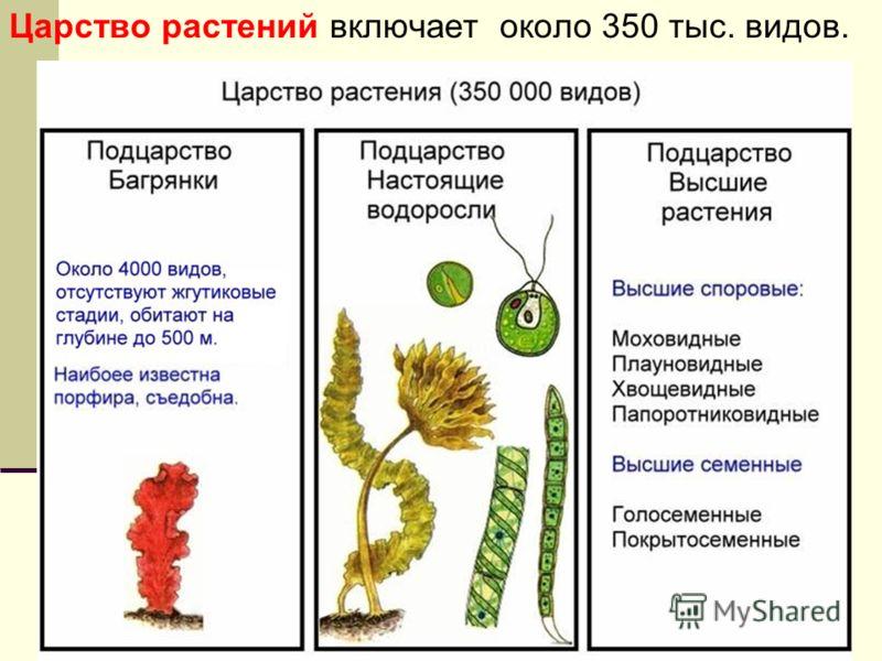 Царство растений включает около 350 тыс. видов.