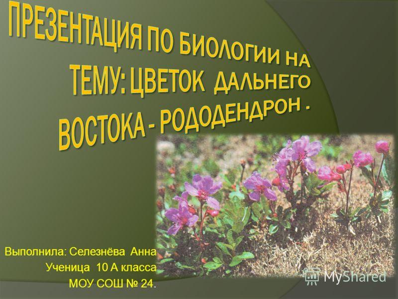 Выполнила: Селезнёва Анна Ученица 10 А класса МОУ СОШ 24.