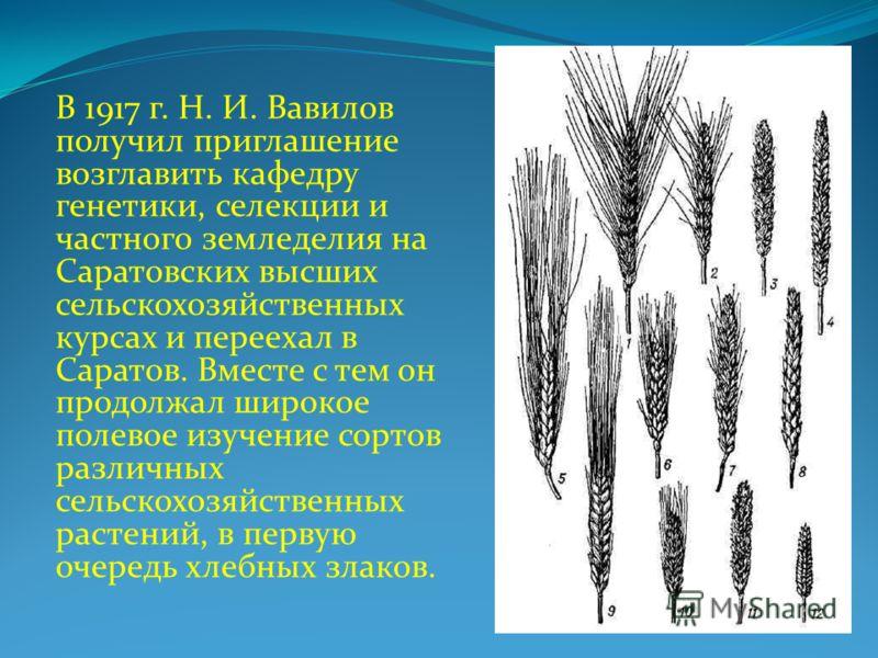 В 1917 г. Н. И. Вавилов получил приглашение возглавить кафедру генетики, селекции и частного земледелия на Саратовских высших сельскохозяйственных курсах и переехал в Саратов. Вместе с тем он продолжал широкое полевое изучение сортов различных сельск