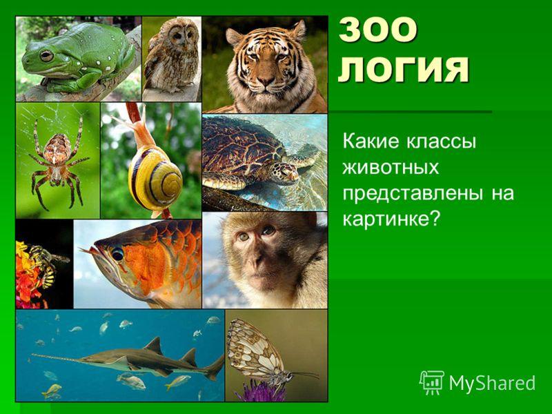 ЗОО ЛОГИЯ Какие классы животных представлены на картинке?
