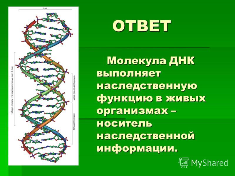 ОТВЕТ Молекула ДНК выполняет наследственную функцию в живых организмах – носитель наследственной информации. ОТВЕТ Молекула ДНК выполняет наследственную функцию в живых организмах – носитель наследственной информации.