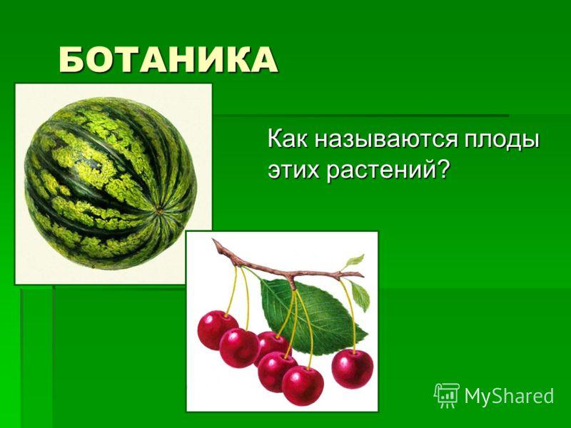 БОТАНИКА БОТАНИКА Как называются плоды этих растений? Как называются плоды этих растений?
