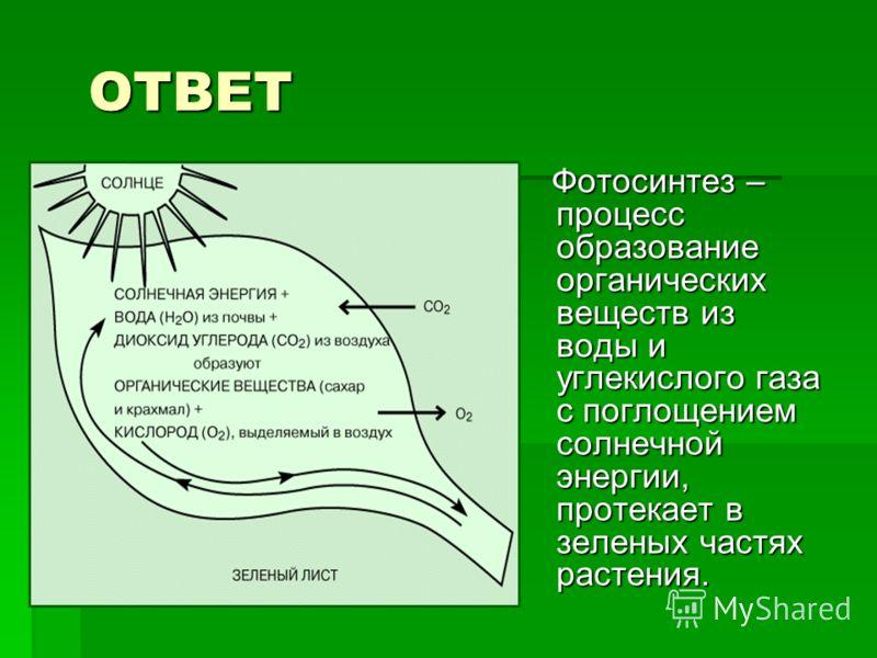ОТВЕТ ОТВЕТ Фотосинтез – процесс образование органических веществ из воды и углекислого газа с поглощением солнечной энергии, протекает в зеленых частях растения. Фотосинтез – процесс образование органических веществ из воды и углекислого газа с погл