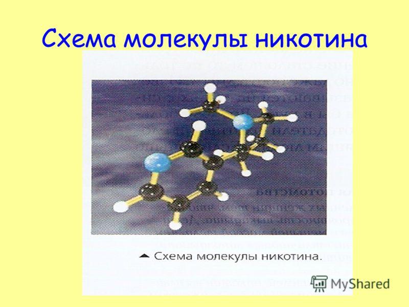 Схема молекулы никотина