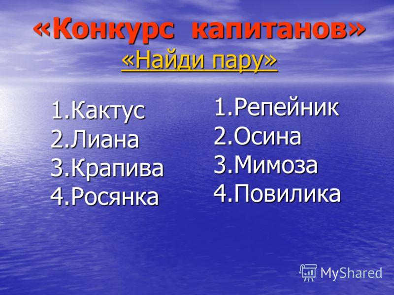 «Конкурс капитанов» «Найди пару» 1.Кактус2.Лиана3.Крапива4.Росянка 1.Репейник2.Осина3.Мимоза4.Повилика