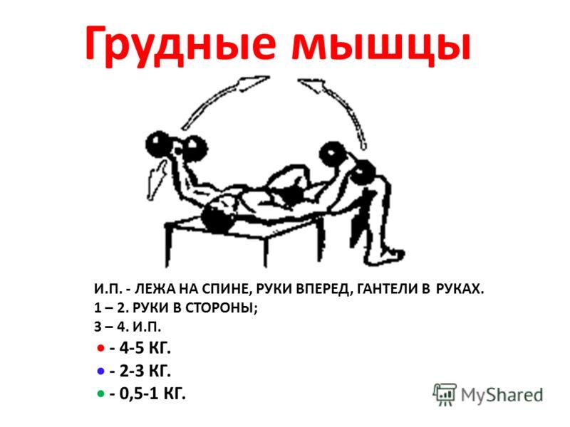 И.П. - ЛЕЖА НА СПИНЕ, РУКИ ВПЕРЕД, ГАНТЕЛИ В РУКАХ. 1 – 2. РУКИ В СТОРОНЫ; 3 – 4. И.П. - 4-5 КГ. - 2-3 КГ. - 0,5-1 КГ. Грудные мышцы