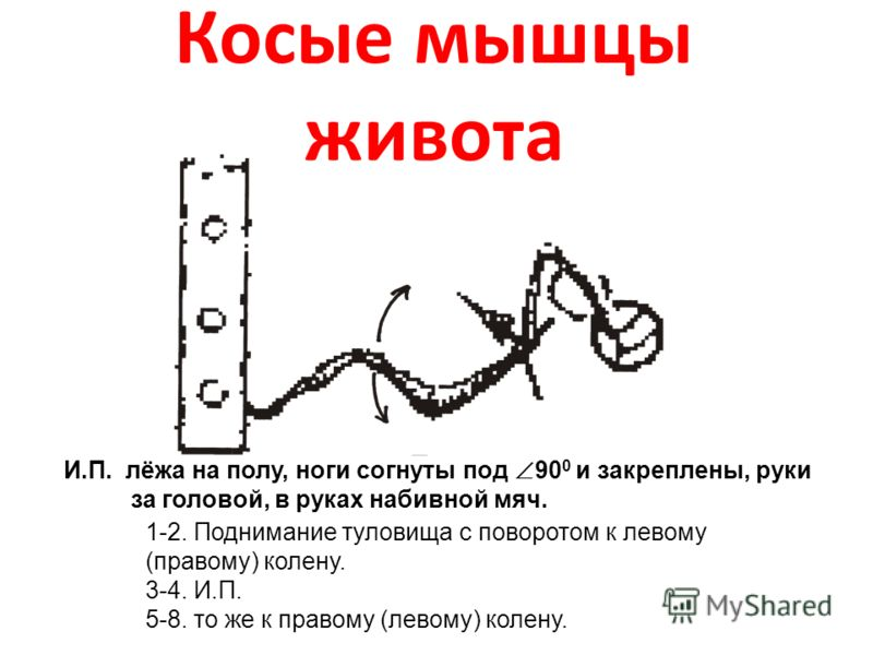 Косые мышцы живота И.П. лёжа на полу, ноги согнуты под 90 0 и закреплены, руки за головой, в руках набивной мяч. 1-2. Поднимание туловища с поворотом к левому (правому) колену. 3-4. И.П. 5-8. то же к правому (левому) колену.