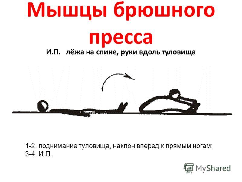 Мышцы брюшного пресса И.П. лёжа на спине, руки вдоль туловища 1-2. поднимание туловища, наклон вперед к прямым ногам; 3-4. И.П.