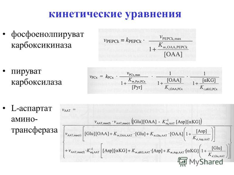 кинетические уравнения фосфоенолпируват карбоксикиназа пируват карбоксилаза L-аспартат амино- трансфераза
