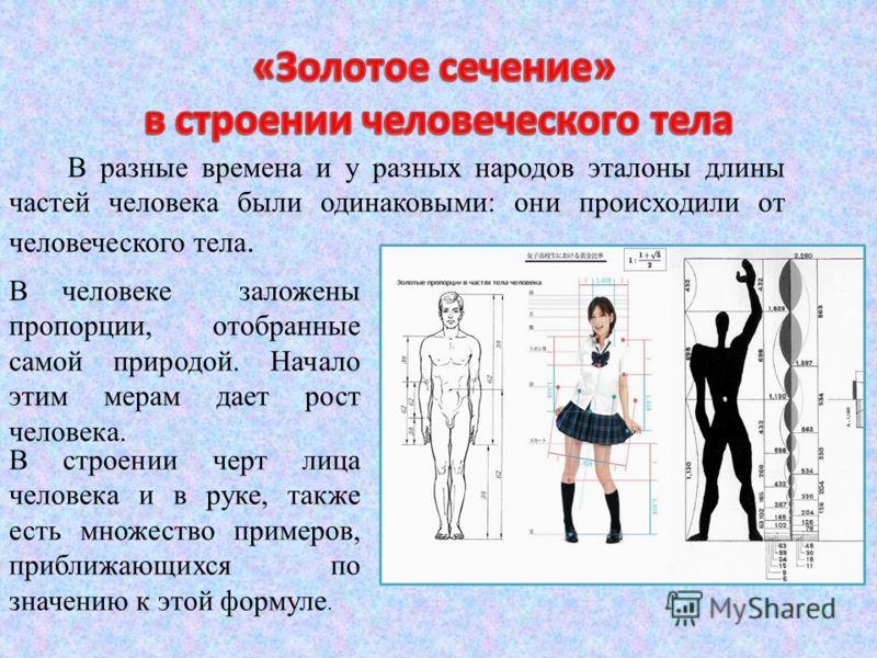 В разные времена и у разных народов эталоны длины частей человека были одинаковыми: они происходили от человеческого тела. В человеке заложены пропорции, отобранные самой природой. Начало этим мерам дает рост человека. В строении черт лица человека и