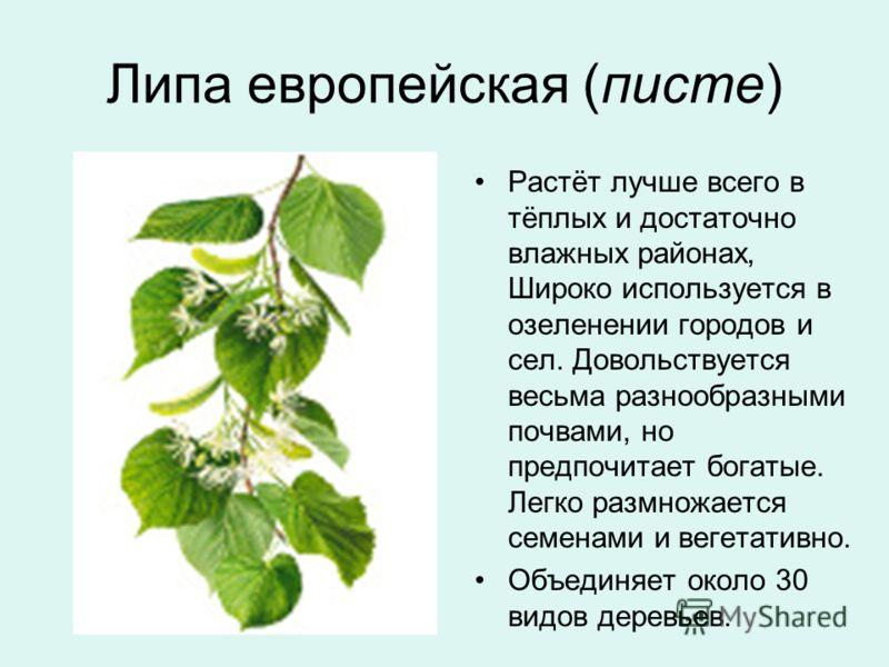 Липа европейская (писте) Растёт лучше всего в тёплых и достаточно влажных районах, Широко используется в озеленении городов и сел. Довольствуется весьма разнообразными почвами, но предпочитает богатые. Легко размножается семенами и вегетативно. Объед