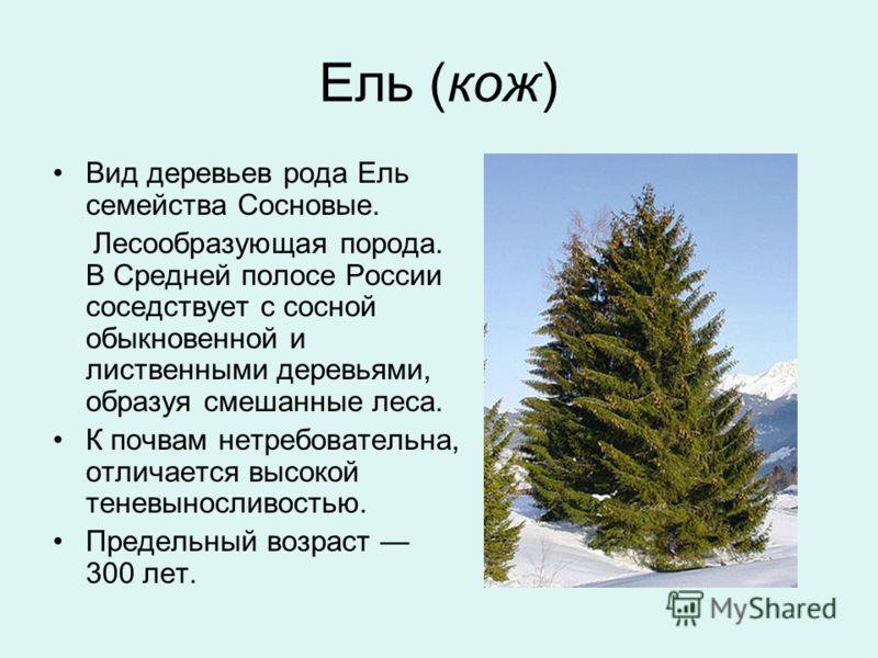 Ель (кож) Вид деревьев рода Ель семейства Сосновые. Лесообразующая порода. В Средней полосе России соседствует с сосной обыкновенной и лиственными деревьями, образуя смешанные леса. К почвам нетребовательна, отличается высокой теневыносливостью. Пред