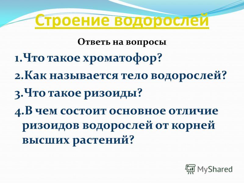 Строение водорослей Ответь на вопросы 1.Что такое хроматофор? 2.Как называется тело водорослей? 3.Что такое ризоиды? 4.В чем состоит основное отличие ризоидов водорослей от корней высших растений?