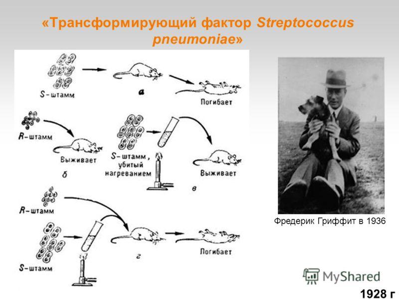 «Трансформирующий фактор Streptococcus pneumoniae» Фредерик Гриффит в 1936 1928 г