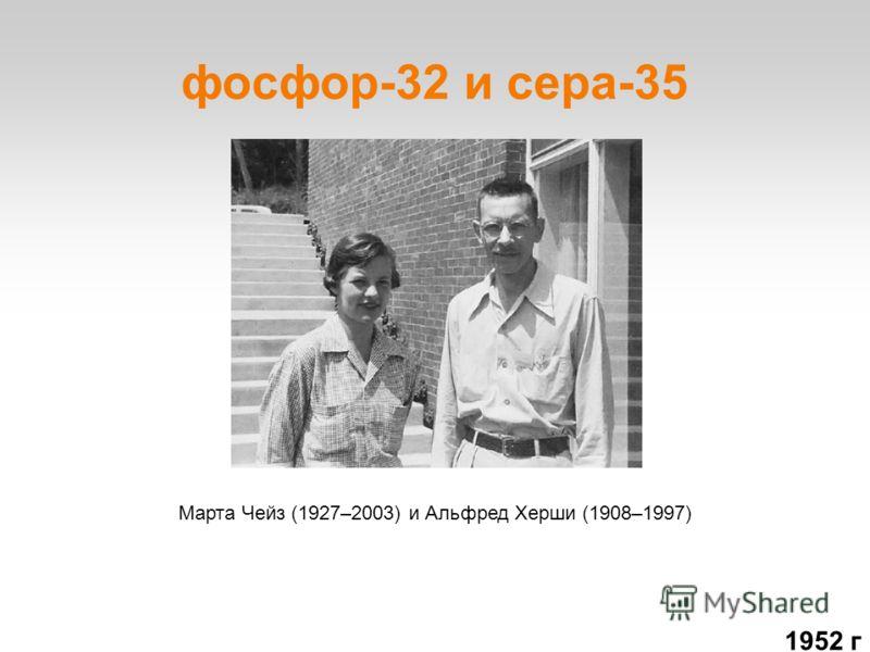 фосфор-32 и сера-35 Марта Чейз (1927–2003) и Альфред Херши (1908–1997) 1952 г